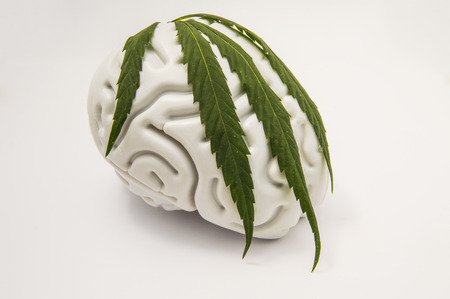 The figure of the human brain, covered with a green leaf on top of medical cannabis. The idea for the characteristics of marijuana addiction or use of marijuana in neurology or neuroscience Stock Photo