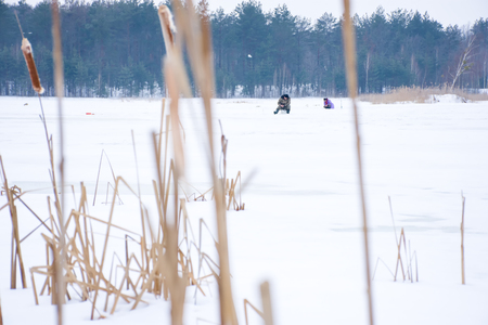 A scene from the winter ice fishing on a wild lake. In the distance are the figures of fishermen on a frozen lake with white snow in a forest in the background, on the front - the dried stems of reed Stok Fotoğraf