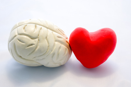 Rote Karte Herzform und Figur des menschlichen Gehirns stehen nebeneinander auf weißem Hintergrund. Verbindung von Herz und Gehirn als Paar oder Wahl, wem man folgen soll, oder ihre Interaktion im Körper Standard-Bild