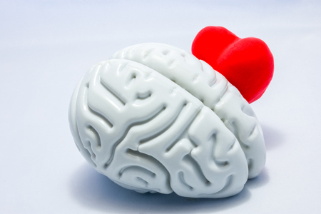Brain and heart on a white background. Heart shape peeps or hiding behind the anatomical shape of the brain. The brain protects the heart against the negative impact or influence