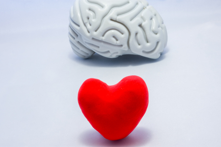 Red heart in foreground of photo and anatomical shape of brain in background. Concept or idea photo selection priority authority in decision-making in both men and women,  importance of organ to body