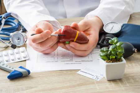 All'appuntamento del medico, il medico mostra al paziente la forma del fegato con particolare attenzione alla mano con l'organo. Scena che spiega le cause del paziente e la localizzazione delle malattie del fegato, del sistema epatobiliare, della cistifellea Archivio Fotografico