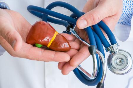 Concetto di diagnostica fotografica e trattamento delle malattie del fegato e della cistifellea. Il dottore vestito con un camice bianco da laboratorio in una mano tiene la figura di fegato o epar, in un altro stetoscopio contorto foto da vicino