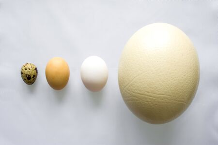 Eggs - ostrich, chicken and quail is on gray background in order of decreasing or increasing relative to size top view. Concept or idea photo compare sizes, from largest to smallest, size does matter