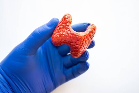 Realistic anatomical model of thyroid gland is in hand of doctor, health medical professional or scientist wearing blue glove. Concept photo of studying anatomy, diseases of thyroid  endocrine system Imagens - 138884089
