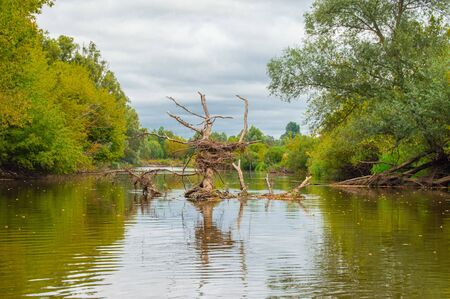Submerged, dead dry tree in middle of riverbed created bizarre, grotesque, fantastic, strangely shaped formation with bird nest in middle and beautiful reflection in water. Teterev River in Ukraine