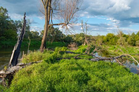 View of Western Bug River bed with split into two parts and island with dead dry trees in middle against blue sky with dark clouds. Photos of Western Bug River, which flows in Europe - Ukraine Poland