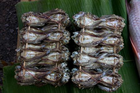 conservacion alimentos: Pescado seco como la conservaci�n de alimentos mediante el pescado cogimos el sol para hacer comida almacenada durante m�s tiempo Foto de archivo
