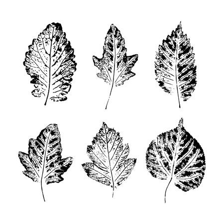 Set of vector Leaf imprints. Collection of black leaves imprints on white background Illustration