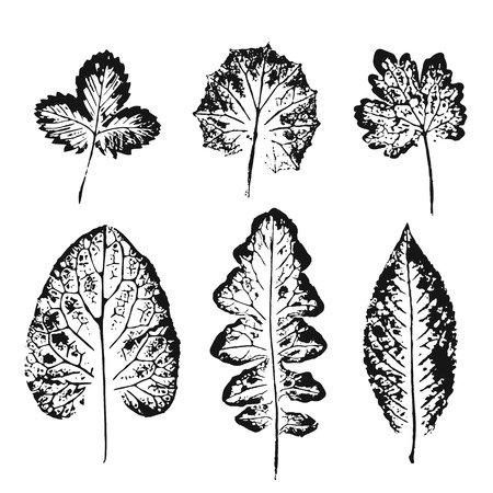 imprints: Collection of black leaves imprints on white background. Autumn leaves. Grunge leaves