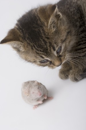 Child cat and white mouse Stock Photo - 4285890