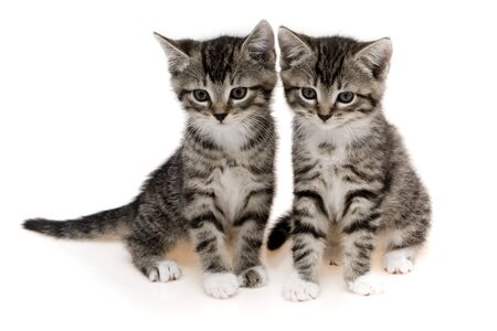 Cats on white background photo