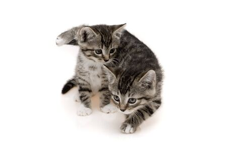 Two child cats photo