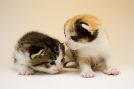 Cute cats Stock Photo - 4310802