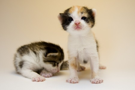 Cute cats Stock Photo - 4310773