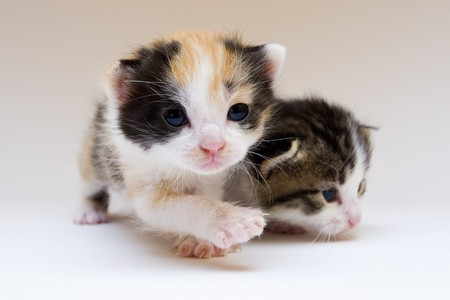 Two child cats Stock Photo - 4310809