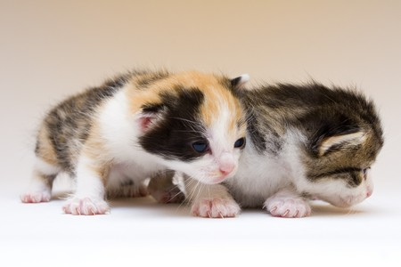 Two child cats Stock Photo - 4310838