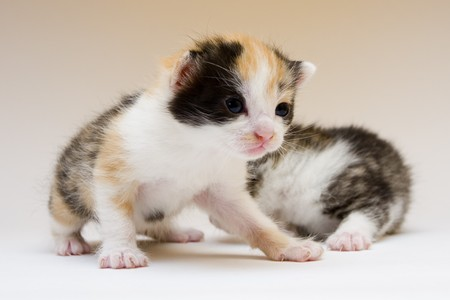 Two child cats Stock Photo - 4310798