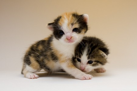 Cute cats Stock Photo - 4310840