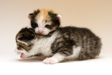 Two child cats Stock Photo - 4310844