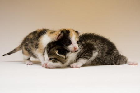 Cute cats Stock Photo - 4310811