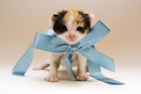 Cute child cat photo