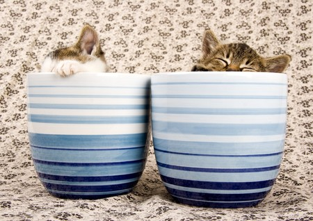 Two child cats Stock Photo - 4334110