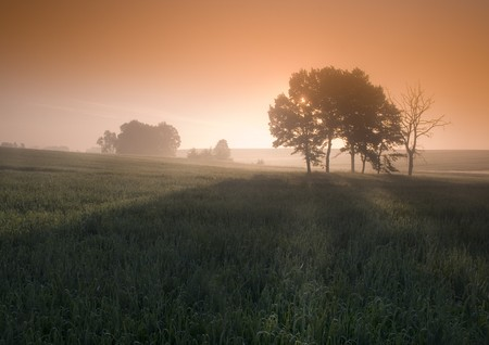 pigpen: Foggy sunrise Stock Photo