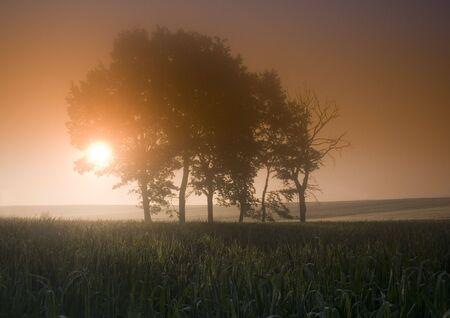 Foggy sunrise photo