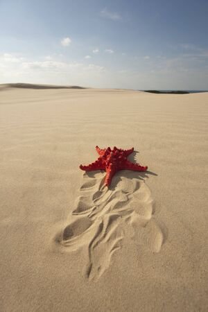 Starfish on Sand dune photo