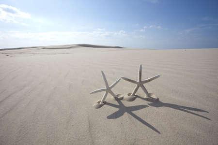 Starfish on Sand dune photo