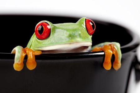 blue frog: Red eyed rana sentado en la taza negra Foto de archivo