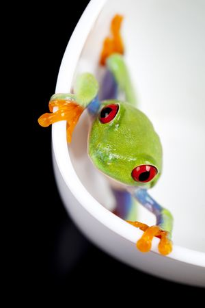 Red eyed tree frog sitting on white cup photo