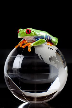 anura: Red eyed tree frog sitting on globe Stock Photo