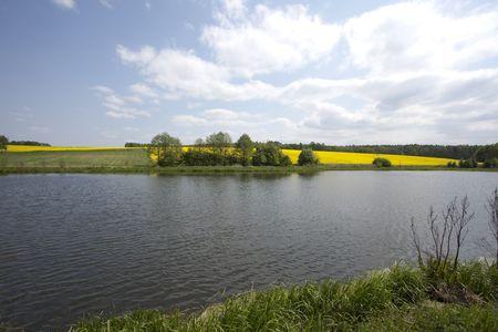 oilseed: Yellow oilseed rape and lake