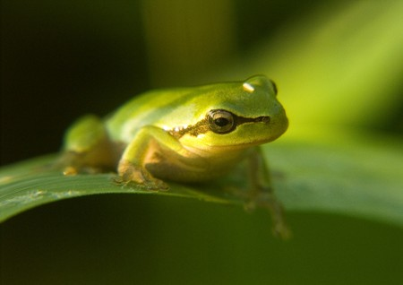 small frog photo