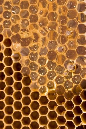 abejas panal: Miel