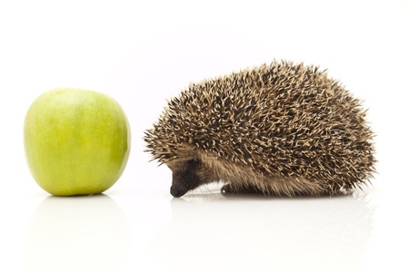 Little hedgehog and apple Stock Photo - 8649495