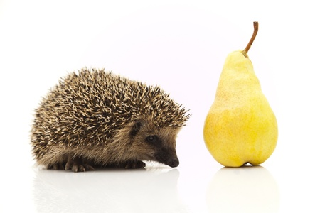 Little hedgehog and pear Stock Photo - 8649474