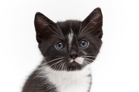 Child cat on white background Stock Photo - 8649571