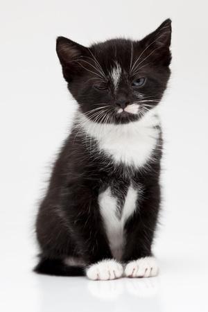 Little black kitten Stock Photo - 8649585