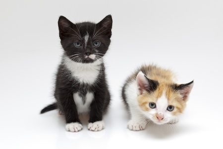 Two child cats on white background