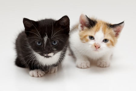 Two child cats on white background Stock Photo - 8649586