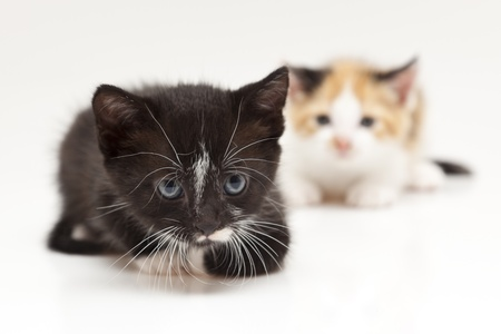 Two child cats on white background Stock Photo - 8649558