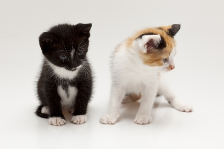 Two child cats on white background Stock Photo - 8649579