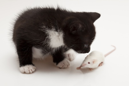 Child cat and grey mouse photo