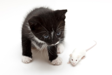 Child cat and grey mouse Stock Photo