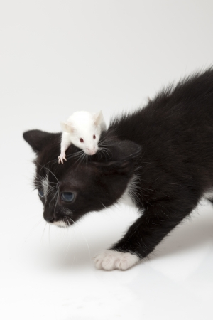 stuffed animals: Child cat and grey mouse Stock Photo