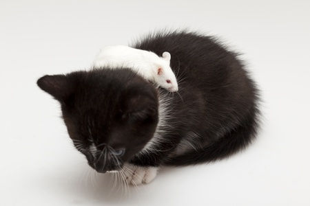 Child cat and grey mouse on white background photo