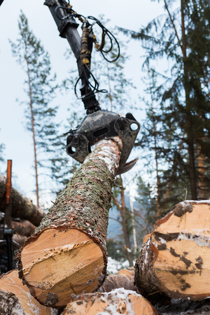 timber harvesting: View of a machine operating a raw piece of wood.